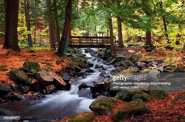 Gatineau Park - Stream