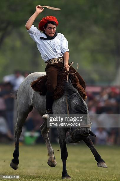 A gaucho rides a colt at a rodeo exhibition during during 'Tradition Day' in San Antonio de Areco Argentina on November 8 2015 The celebration aims...
