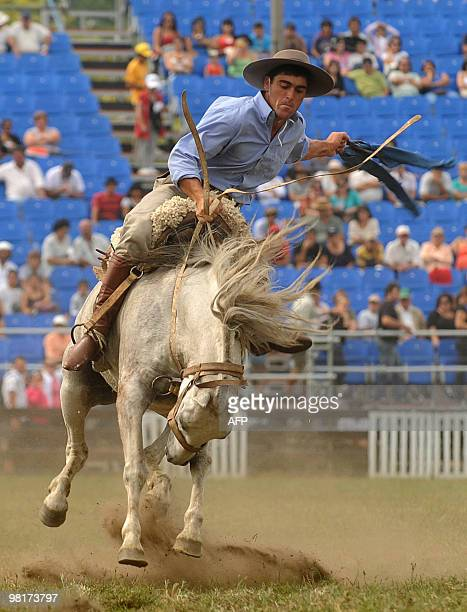 A gaucho rides a colt during a rodeo of the Patria Grande festival in Montevideo on March 31 2010 The Prado Criolla Week is a rural cultural event...
