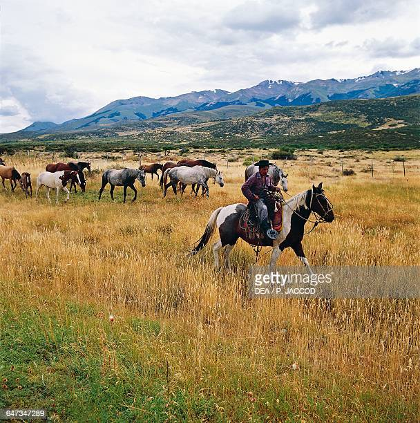 Gaucho with horses Leleque Patagonia Argentina