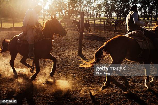 Gauchos Jose Luis Semorile left and his stepson Luis Daniel Cerrudo right train horses on the Estancia La Argentina farm outside of San Antonio de...
