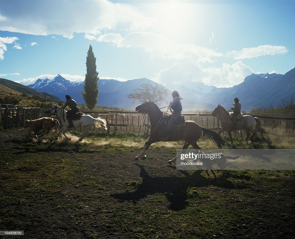 Gauchos Working on Cattle Ranch : Stock Photo