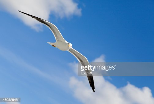 Gaviotas 19 (Noruega). : Stock Photo