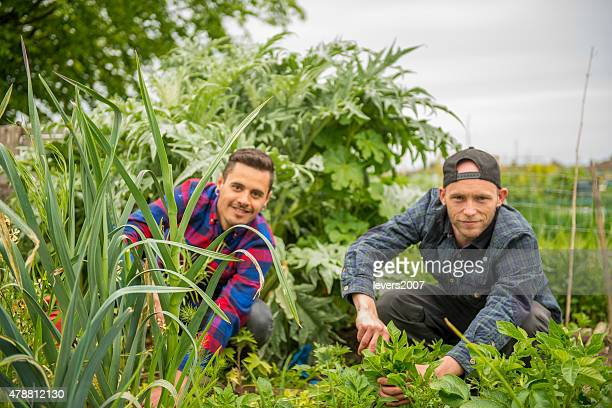 Gay couple working together on their allotment, Dublin, Ireland.