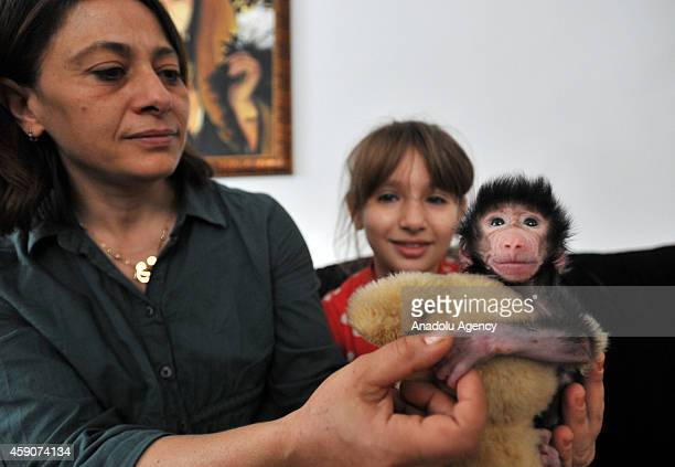 Gaziantep Zoo clinic chief and motheroftwo Ozsun Yurt Gunes takes care of a baby baboon after its mom refused to have her newborn baby at Gaziantep...