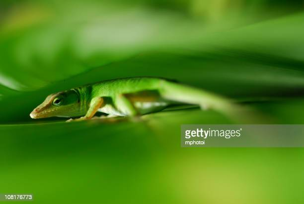 Gecko Close-up