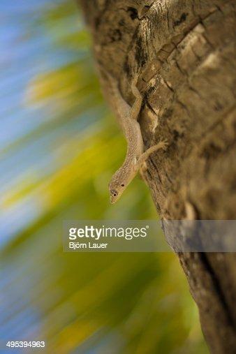 Gecko on a palm tree