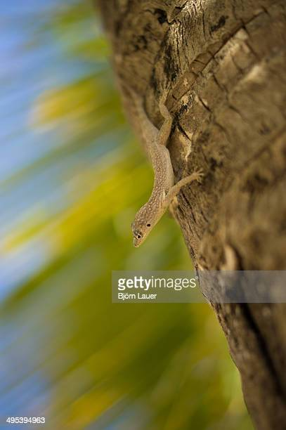 Gecko on a palm tree