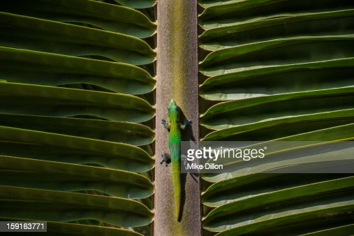 Gecko : Stock Photo