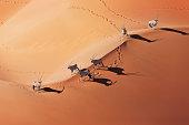 Gemsboks (Oryx gazella) in typical desert habitat. Namib desert, Namib-Naukluft National Park, Namibia, Africa