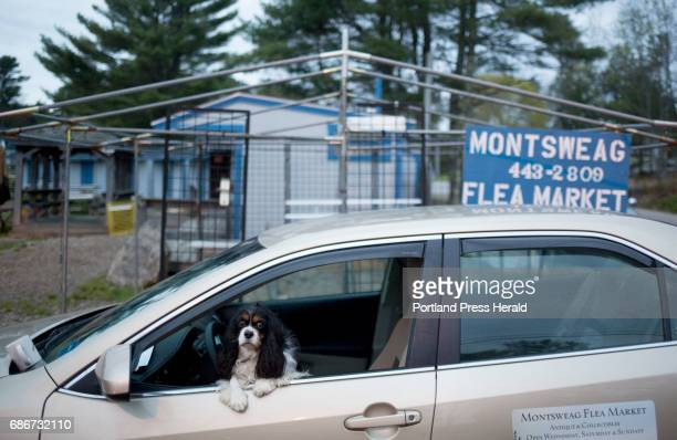 Gena Kilkenny's dog Naace whose name is an anagram of Hunnewell's grandchildren's names hangs out in Hunnewell's car before the opening of the...