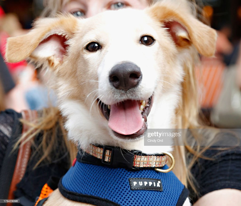 General atmosphere at the Broadway Barks 15th Animal Adoption Event at Shubert Alley on July 13, 2013 in New York City.