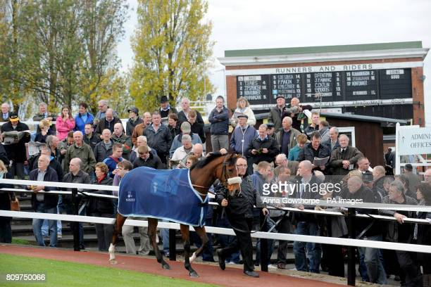 A general view as a horse is paraded around the parade ring at Pontefract Racecourse