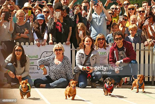 A general view as dachshunds compete in the Hophaus Southgate Inaugural Dachshund Running of the Wieners Race on September 19 2015 in Melbourne...