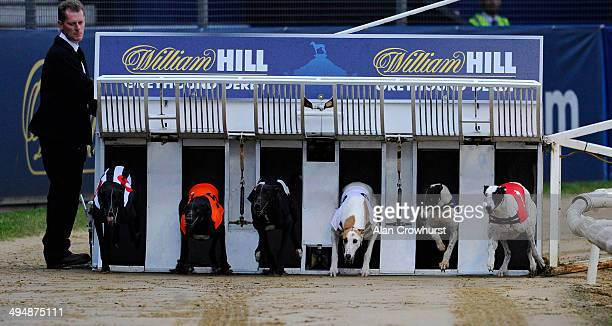 A general view as runners leave the traps at Wimbledon Stadium on May 31 2014 in Wimbledon England