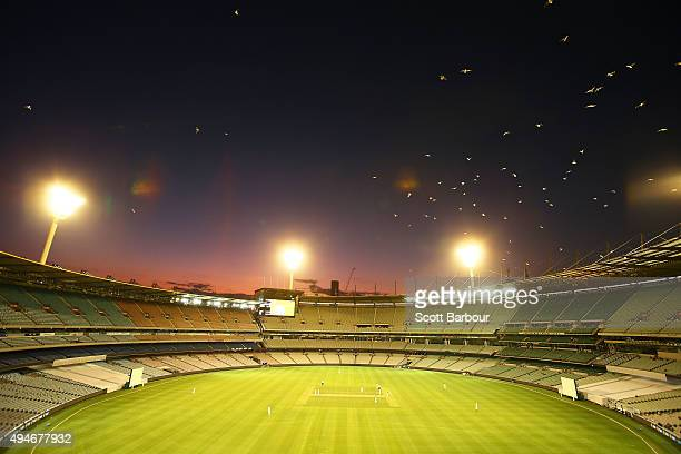 A general view at dusk as seagulls hover overhead during day one of the Sheffield Shield match between Victoria and Queensland at Melbourne Cricket...