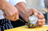 General view of a chef preparing oysters by opening with a knife at the Whitstable Oyster Festival held every year by Whitstable Harbour since Norman...