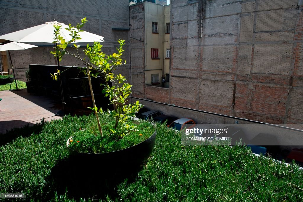 General view of a garden for the recycling of rain water on the terrace of a house in Mexico City, on January 14, 2013. The 'Water House' company recycles and filters rain water to be bottled and sold.