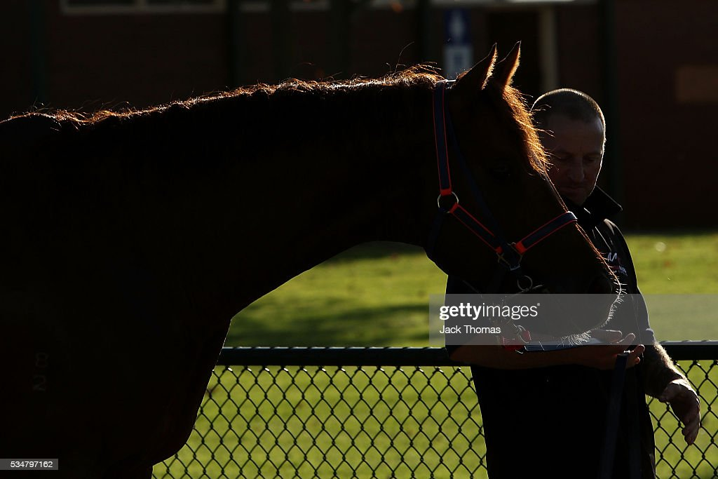 General View of a horse in the parade ring during Melbourne Racing at Sandown Lakeside on May 28, 2016 in Melbourne, Australia.