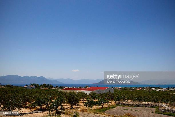 A general view of a pistachio farm of a local farmer Nota Grika on the island of Aegina on June 11 2012 Grika said this year's crop will be an...