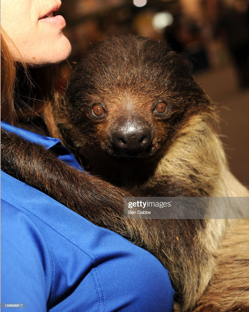 A general view of a sloth at The 10th Annual New York Times Travel Show Ribbon Cutting And Preview at Javits Center on January 18, 2013 in New York City.