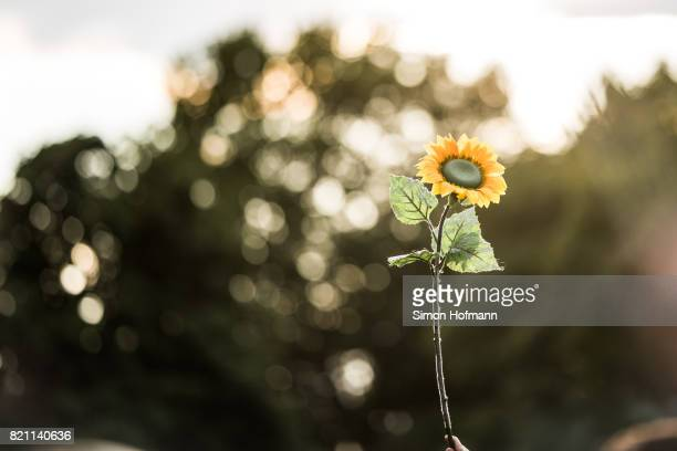A general view of a sunflower during Waidsee Festival on July 22 2017 in Weinheim Germany