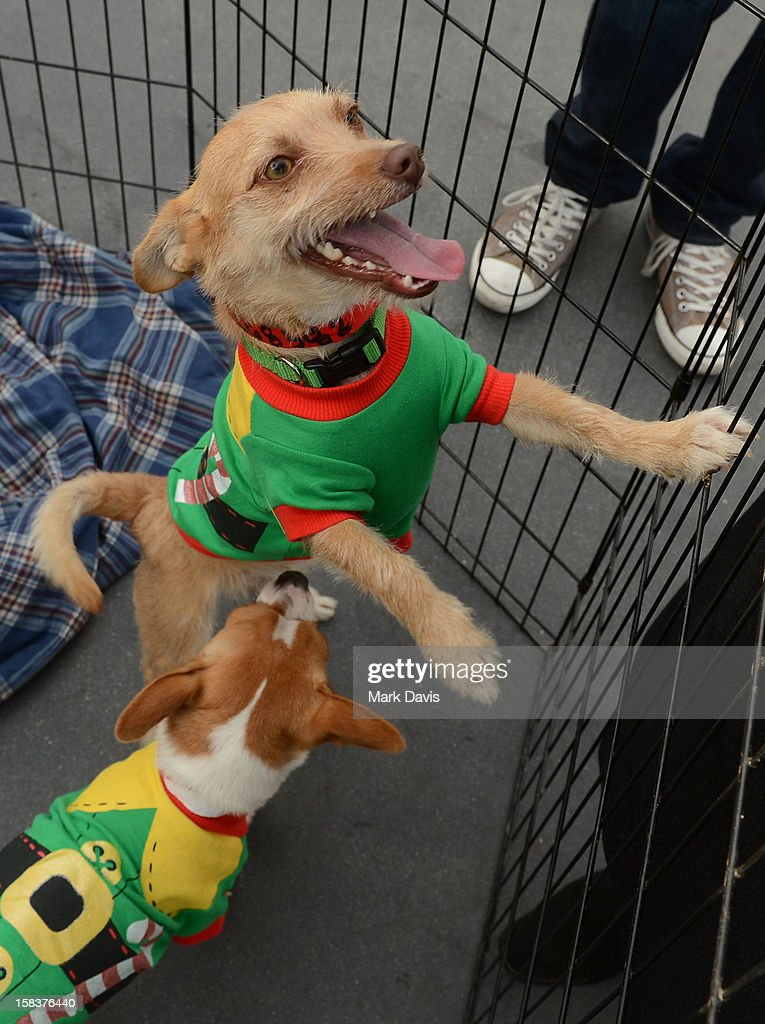 A general view of atmosphere at the 'Grinchmas Max To The Rescue' Holiday Dog Adoption Fair held at Universal Studios Hollywood on December 14, 2012 in Universal City, California.