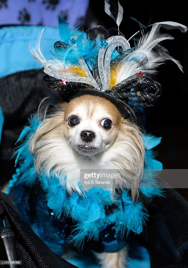 A general view of atmosphere during Celebrity Catwalk: Mardi Paws Back In Black at Shadow on March 10, 2012 in New York City.
