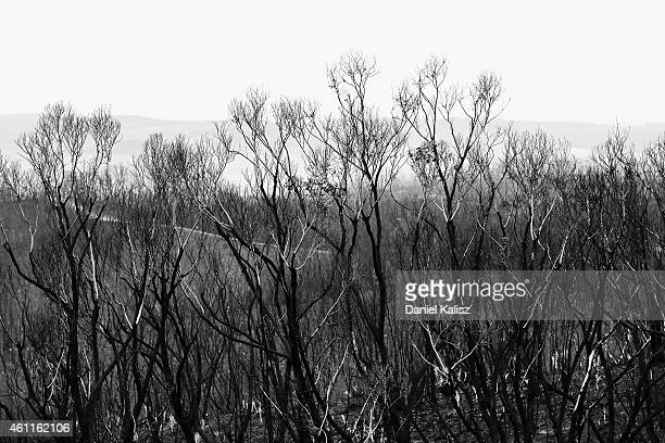 A general view of burnt trees during bushfires in Humbug Scrub in the Adelaide Hills on January 8 2015 in Adelaide Australia