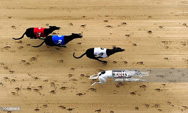 A general view of dogs run at Romford Greyhound Stadium on September 23 2010 in Romford England