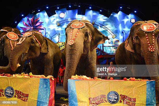 General view of elephants and atmosphere at Ringling Bros and Barnum Bailey's 'Circus XTREME' VIP celebrity red carpet premiere at Staples Center on...