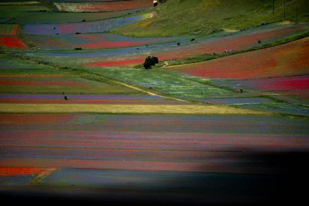 ITA: Blooming In Castelluccio Di Norcia