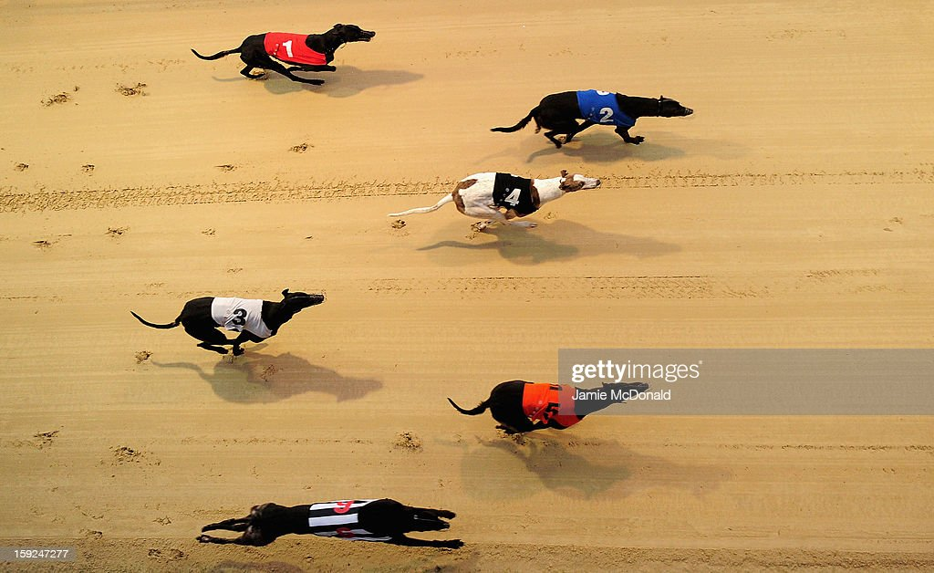 A general view of grehounds running during Race 6 at Romford Greyhound Stadium on January 10, 2013 in Romford, England.