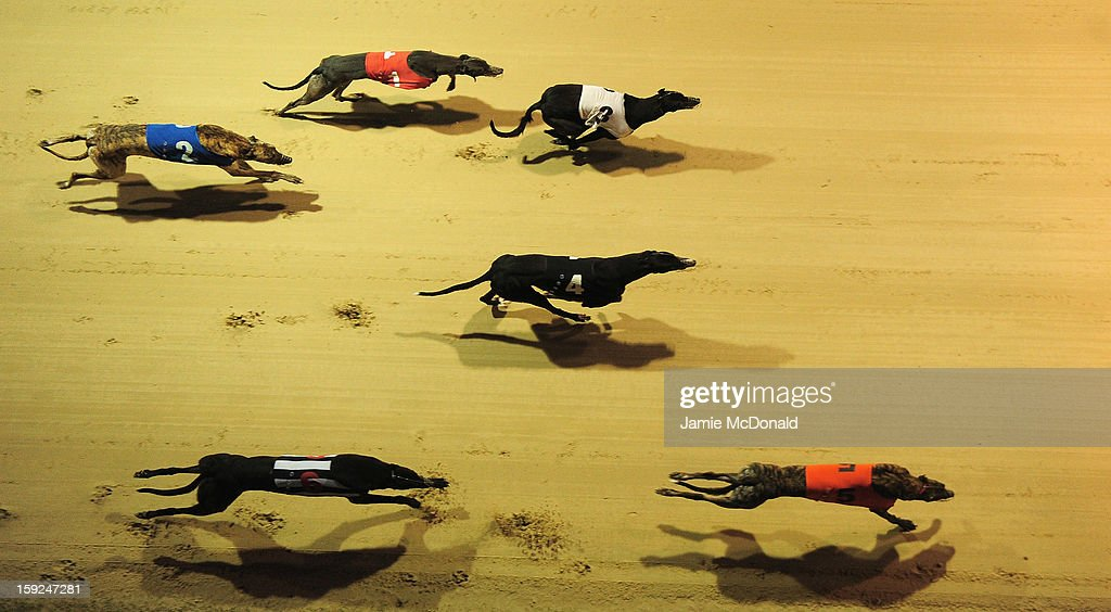 A general view of grehounds running during Race 8 at Romford Greyhound Stadium on January 10, 2013 in Romford, England.