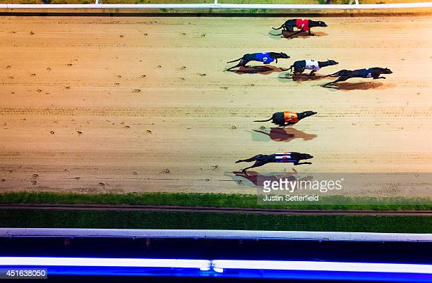 A general view of greyhounds in action at the Coral Romford Greyhound Stadium on July 2 2014 in Romford England