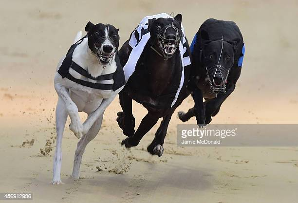 A general view of Greyhounds racing at Coral Romford Greyhound Stadium on October 9 2014 in Romford England