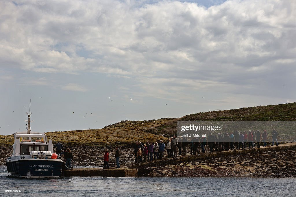 A general view of members of the public queueing to take the boat back the Farne Islands where Puffins are returning to their summer breeding grounds on May 16, 2013 in the Farne Islands, England. A census is carried out every five years with the last one in 2008 recording 36,500 pairs of puffins. The Farne Islands, offer good protection for the birds to nest, providing excellent sources of food, and few ground predators, despite this rangers fear that the extreme winter could impact on breeding numbers.