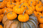 A general view of miniature pumpkins at Saint Marks Church GreenMarket on October 28 2014 in New York City