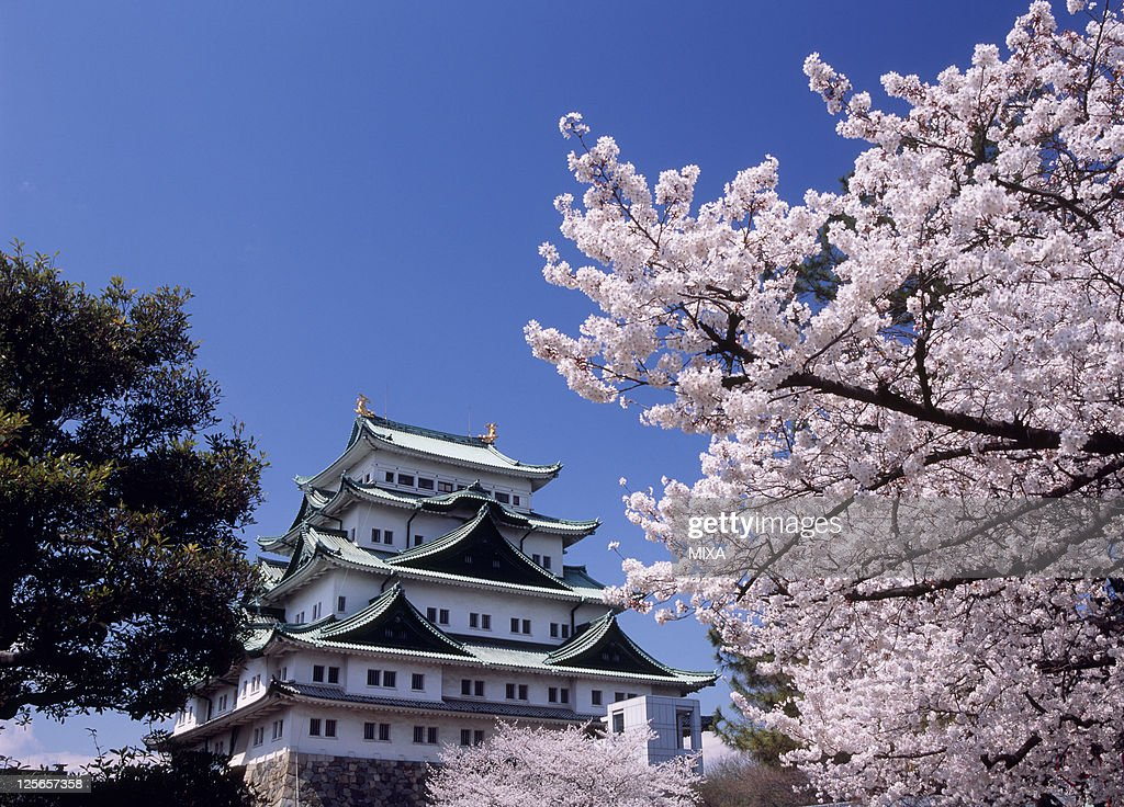 A general view of Nagoya Castle and cherry blossoms on May 1 2007 in Nagoya Aichi Japan