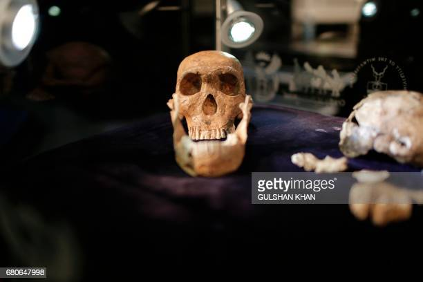 A general view of 'NEO' a new skeleton fossil findings of the Homo Naledi Hominin species is pictured at the cradle of Human Kind in Maropeng near...