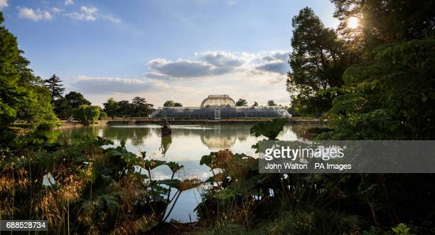 A general view of Palm House at The Royal Botanic Gardens Kew London