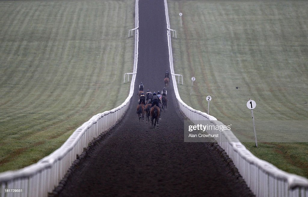A general view of racehorses working on Warren Hill gallops on September 24, 2013 in Newmarket, England.