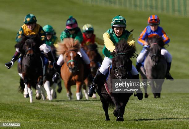 A general view of racing in The Shetland Pony Grand National at Newmarket Racecourse on September 23 2016 in Newmarket England