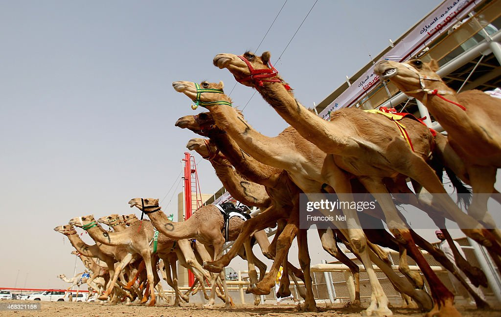 A general view of the action as camels race during Al Marmoom Heritage Festival at the Al Marmoom Camel Racetrack on April 1, 2015 in Dubai, United Arab Emirates.The festival promotes the traditional sport of camel racing within the region.