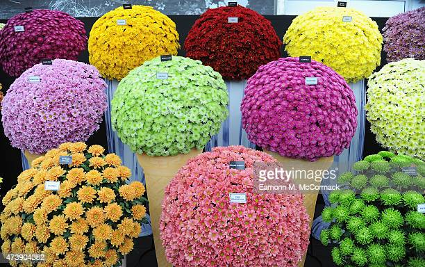 A general view of the Chelsea Flower Show at Royal Hospital Chelsea on May 18 2015 in London England
