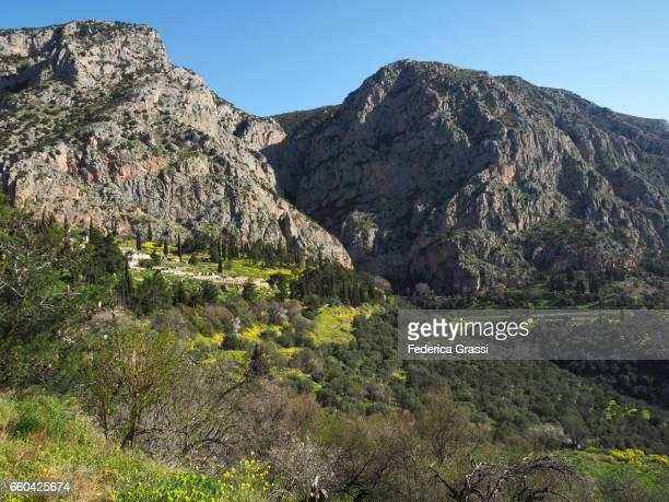 Pallas Stock Photos and Pictures  Getty Images