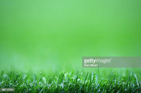 A general view of the green grass on the pitch during the Bobby Moore Cup between West Ham United and Napoli at Upton Park on August 8 2009 in London...