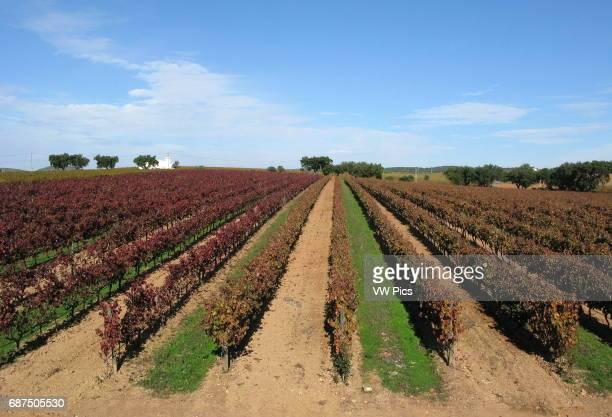 General view of the J Portugal Ramos wine at Estremoz in Alentejo region