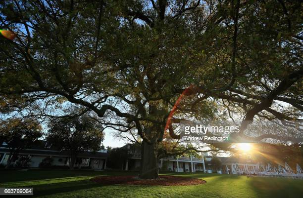 A general view of the large oak tree and clubhouse during the Drive Chip and Putt Championship at Augusta National Golf Club at Augusta National Golf...
