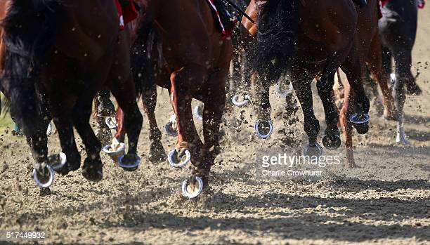 A general view of the racing as horses kick up the all weather track during the All Weather Championships Finals Day at Lingfield Park on March 25...
